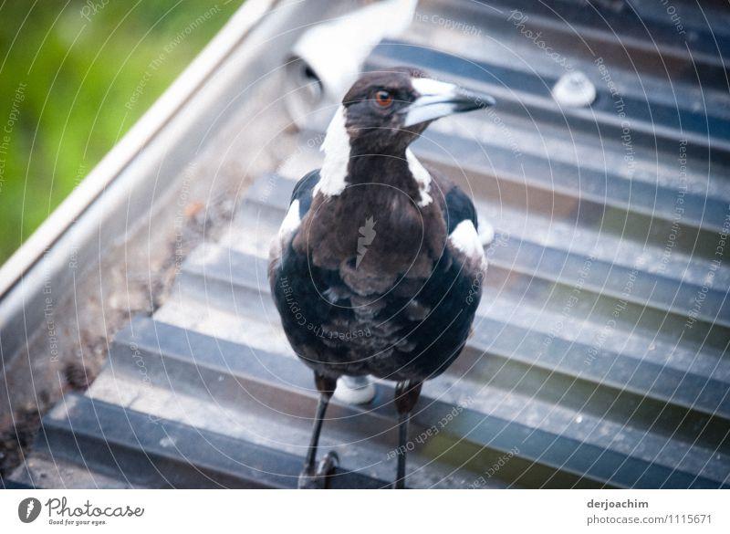Neugierig blau weiß Sommer Freude Tier Umwelt Leben außergewöhnlich Vogel elegant Erfolg Lächeln fantastisch genießen beobachten Schönes Wetter