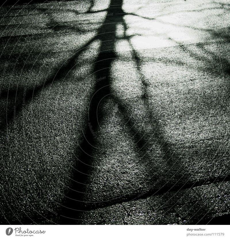 Shadowtree dunkel Graffiti Stimmung Belichtung