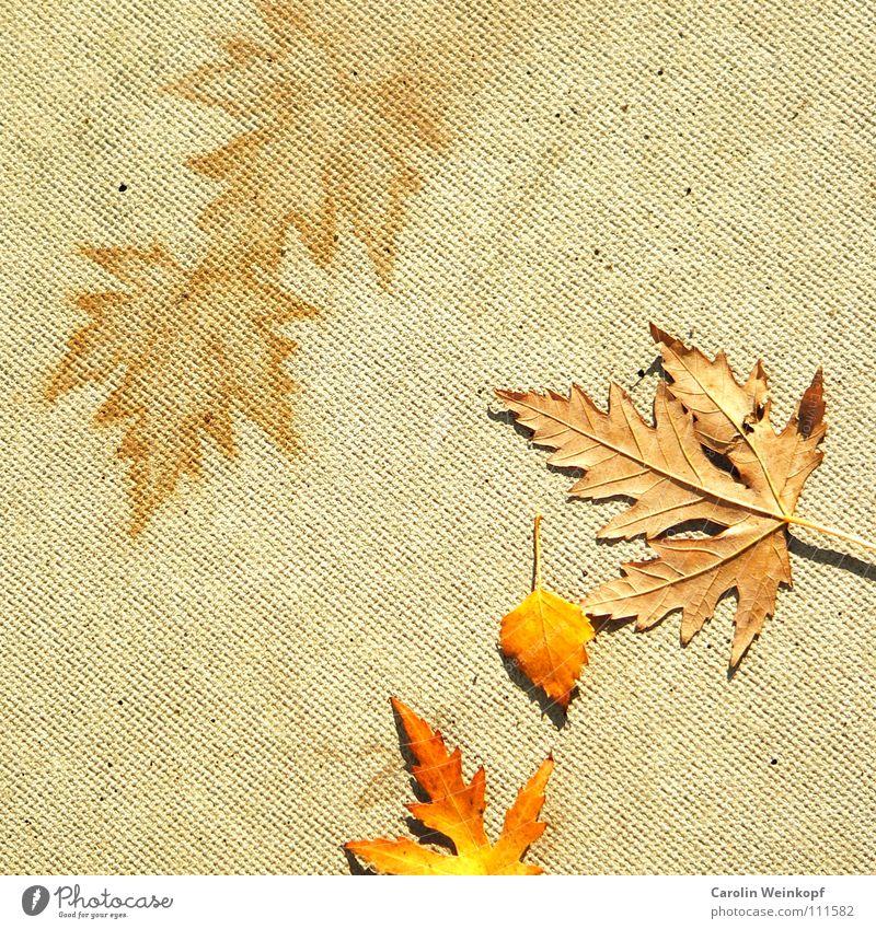 Sein und Schein I rot Blatt gelb Herbst hell orange Beton Bodenbelag Vergänglichkeit Verfall Symbole & Metaphern Schönes Wetter beige November Dezember Oktober