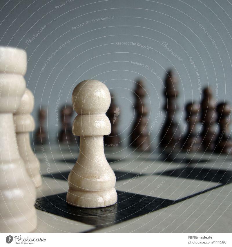 Bauer sucht Frau ... ruhig Spielen Brettspiel Schach Erfolg Verlierer Feld Turm Pferd Holz Denken gut braun grau schwarz weiß geduldig Ausdauer Konzentration