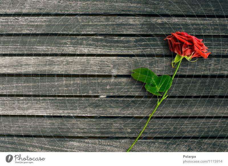 Rote Rose Design Schreibtisch Tisch Tapete Natur Blume alt Liebe retro rot Romantik feminin Holz Wand Konsistenz hölzern Etage Hartholz Hintergrund Oberfläche