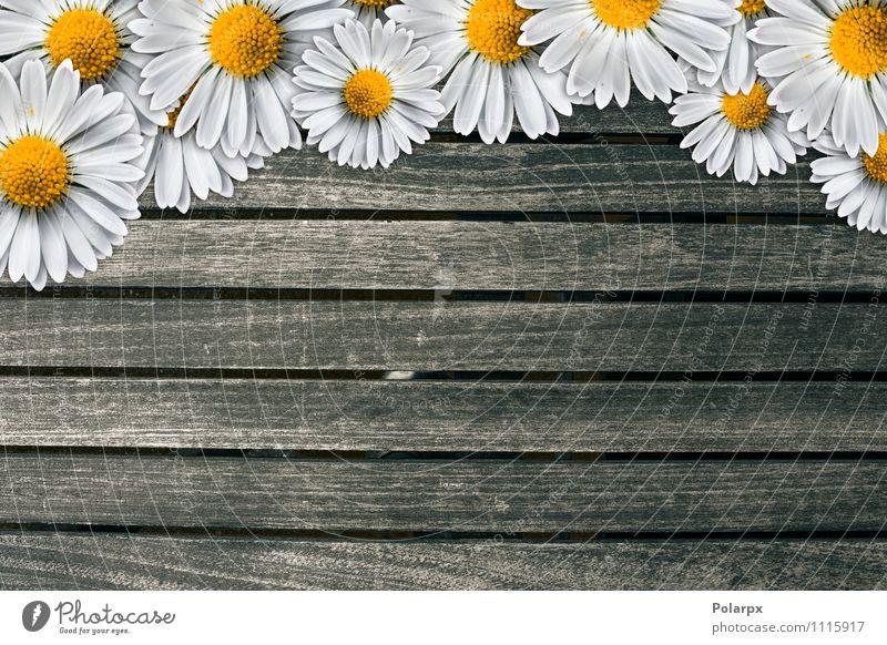 Natur Pflanze weiß Blume braun Design Dekoration & Verzierung frisch Tisch retro Wellness rein Fliesen u. Kacheln Material Etage Schreibtisch