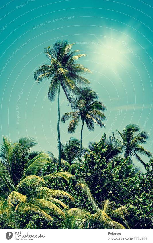 Palmen exotisch Erholung Ferien & Urlaub & Reisen Sommer Sonne Strand Insel Natur Landschaft Pflanze Himmel Sonnenlicht Klima Wärme Baum Blatt Wald Urwald Küste