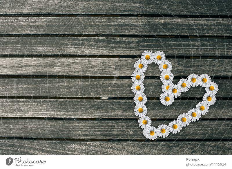 Blumenherz Natur weiß Liebe braun Design Dekoration & Verzierung frisch Tisch Romantik Symbole & Metaphern rein Material Etage Schreibtisch Tapete