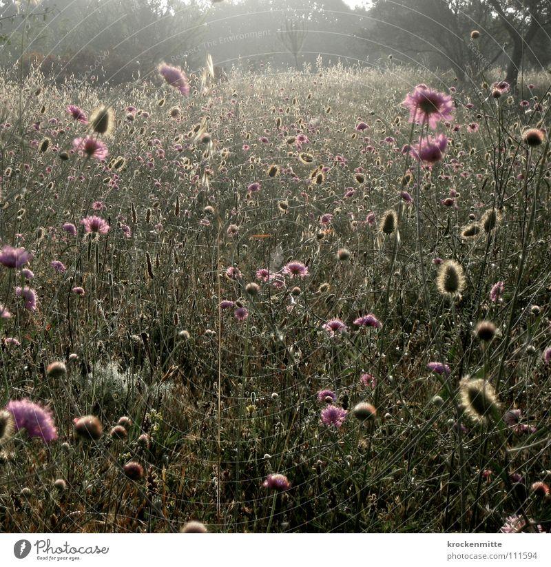 Ein Sommermorgentraum III Natur Blume Pflanze Ferien & Urlaub & Reisen Wiese Stil Blüte Wachstum Italien Blumenwiese Toskana
