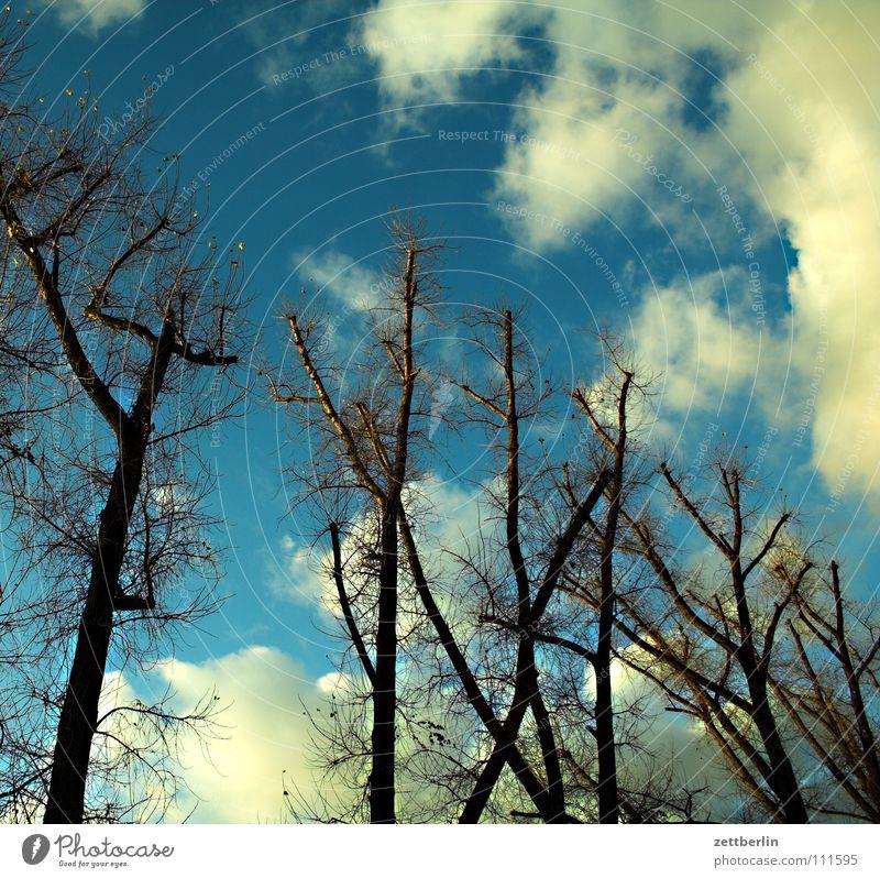 Kreuzberg Himmel Baum blau Blatt Wolken Herbst Park Wind Ast Zweig Wals-Siezenheim