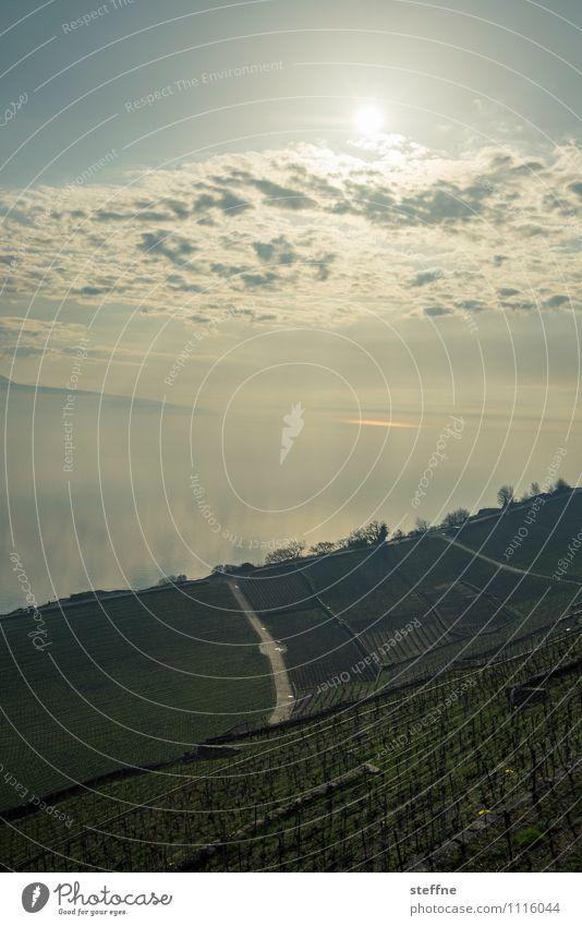 layers Landschaft Himmel Wolken Sonne Frühling Winter Schönes Wetter Hügel Küste Seeufer Ferien & Urlaub & Reisen Schweiz Lausanne Genfer See Weinberg Farbfoto