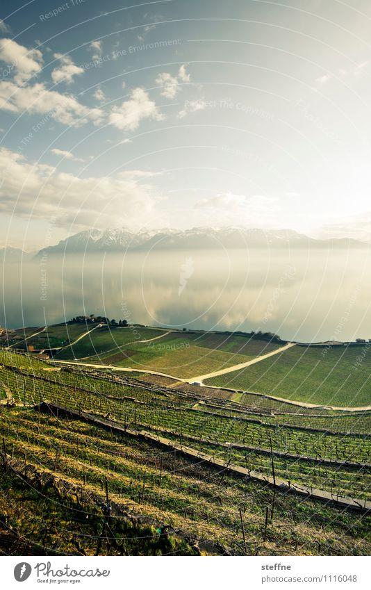 Erholung Natur Landschaft Himmel Sonnenlicht Frühling Schönes Wetter Berge u. Gebirge Alpen See Genfer See Lausanne Schweiz Ferien & Urlaub & Reisen Weinberg