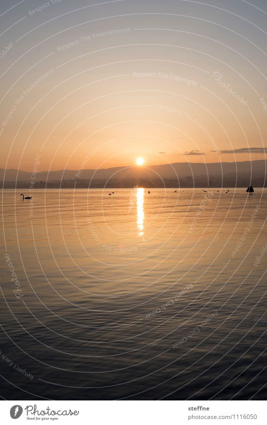Es neigt sich dem Ende Natur Landschaft Wolkenloser Himmel Sonnenaufgang Sonnenuntergang Sonnenlicht Frühling Sommer Schönes Wetter Alpen Berge u. Gebirge