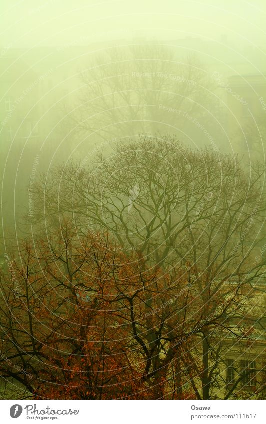 Wühlisch Ecke Holtei Baum Herbst Nebel Ast Baumkrone Smog Friedrichshain Sporthalle
