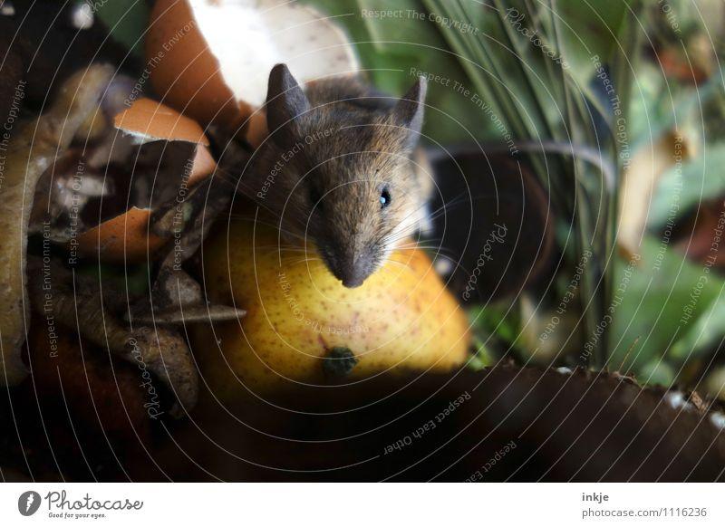 Jeder hat so sein eigenes Paradies ! Tier Gefühle Essen klein Garten Zufriedenheit Wildtier mehrere Ernährung niedlich Neugier Tiergesicht Fressen Maus Ekel