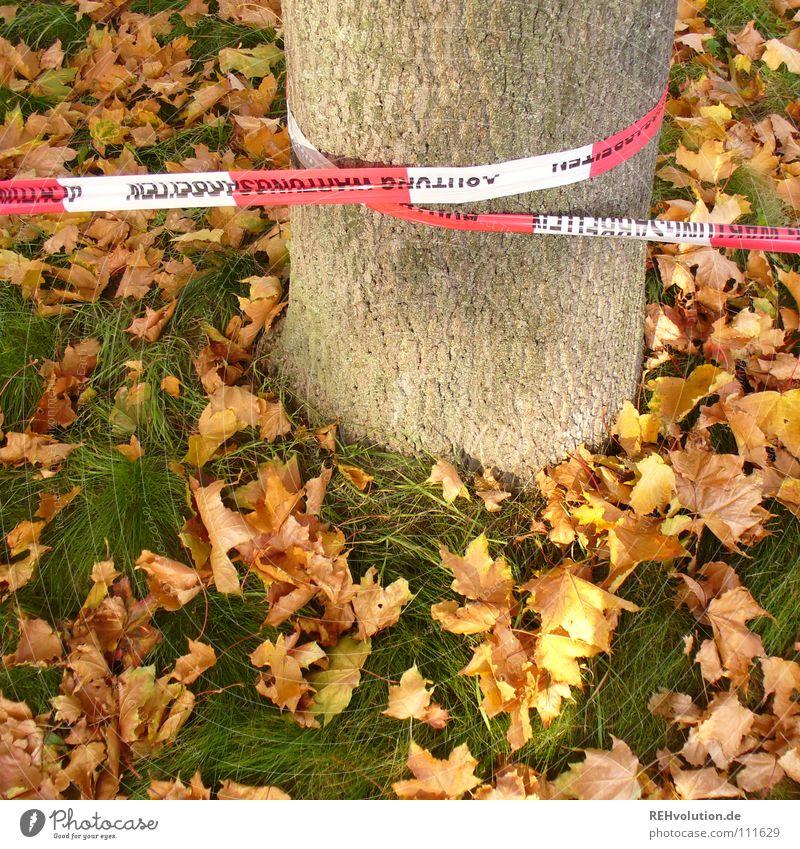 herbstliche Sperrzone Herbst Blatt Grenze gesperrt Baum Baumstamm Gras grün mehrfarbig rot weiß gestreift Rascheln umwickelt Kontrolle Oktober liegen gefährlich