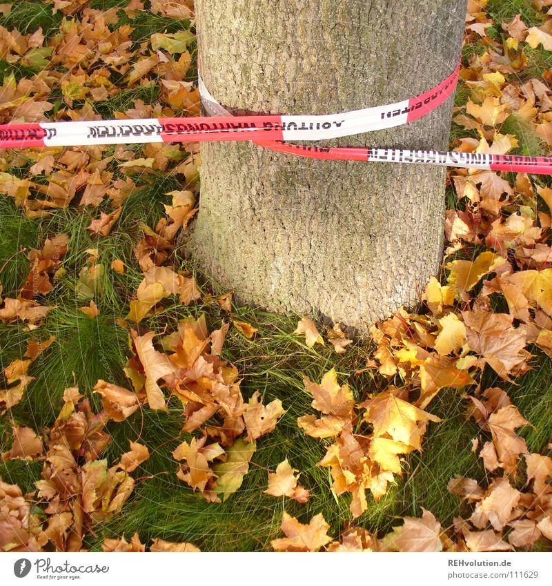 herbstliche Sperrzone weiß Baum grün rot Blatt Herbst Tod Gras Graffiti Sicherheit gefährlich bedrohlich liegen Schutz fallen Vergänglichkeit