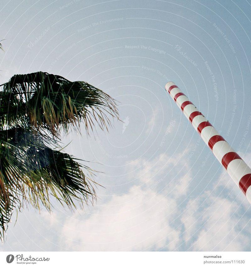 New Öko Palme Wolken Süden Sendemast Streifen Blatt rot Tanne Wellen sichtbar Überwachung Mikrowelle Funktelefon Mobilität fantastisch Stunt Wissenschaften