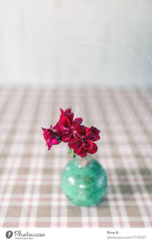 Geranie in grüner Vase hell rot türkis Stillleben Pelargonie Tischwäsche kariert Dekoration & Verzierung Farbfoto Innenaufnahme Menschenleer Textfreiraum oben