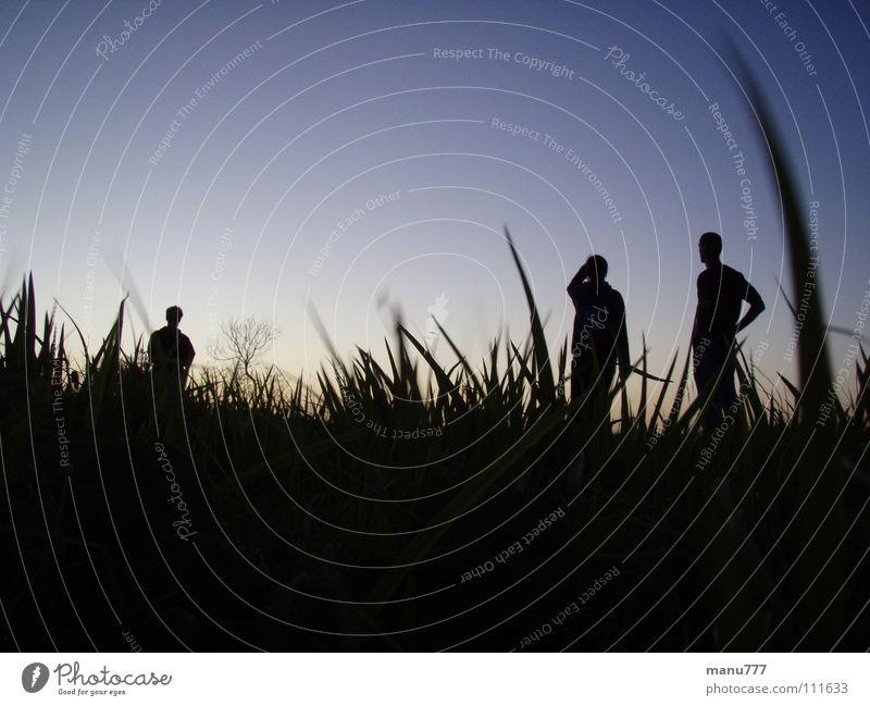 A Bugs View... Gras Mensch Natur Wiese dunkel Jugendliche Silhouette Nightsky Standing Bugsperspective Dark