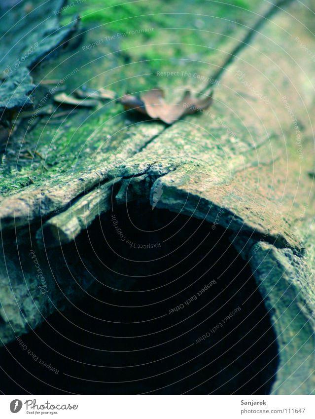 Für alle Rumpelwichte Laubwald Nadelwald Baum Höhle Baumhöhle verrotten hohl Märchen roh Wolf Blatt Baumrinde morsch türkis grün schwarz Laubbaum Nadelbaum