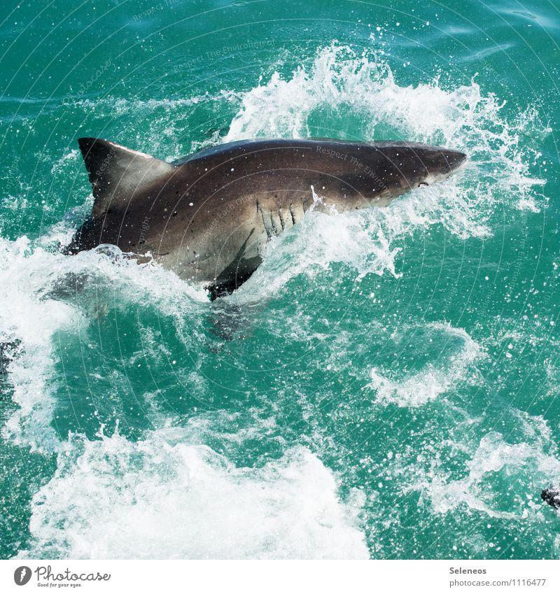 attack Natur Ferien & Urlaub & Reisen Wasser Meer Tier Ferne Umwelt natürlich Angst Wildtier Tourismus gefährlich Ausflug nass Abenteuer Jagd