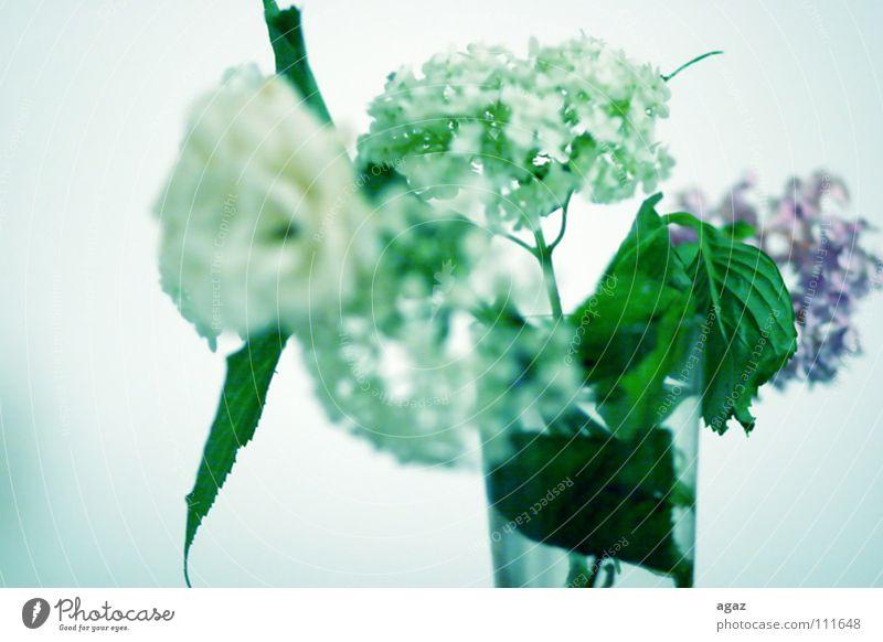 Im Gruen Wasser weiß Blume grün Blüte Frühling Graffiti Raum Deutschland Glas frisch Europa stehen violett Vase Liliengewächse