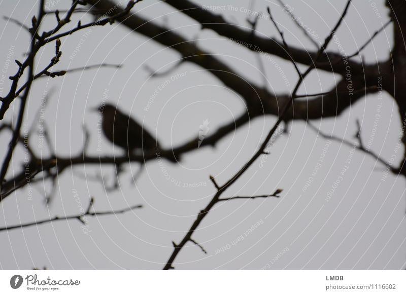 Vogel-Silhouette 1 Tier Wachsamkeit Traurigkeit Sorge Trauer Einsamkeit Ast trüb grau schwarz dunkel Nebel Gedeckte Farben Textfreiraum unten Dämmerung