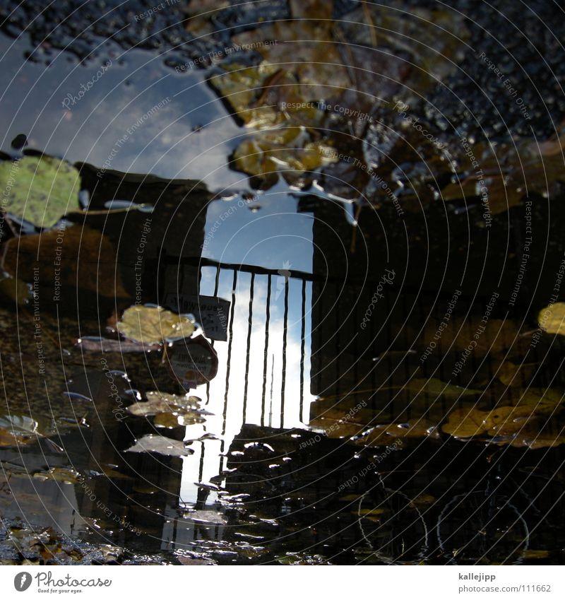 räumungsverkauf IV Pfütze Herbst Reflexion & Spiegelung Haus Wohnung Mieter Vermieter Blatt Baum laublos nass feucht grau schlechtes Wetter Tiefdruckgebiet tief