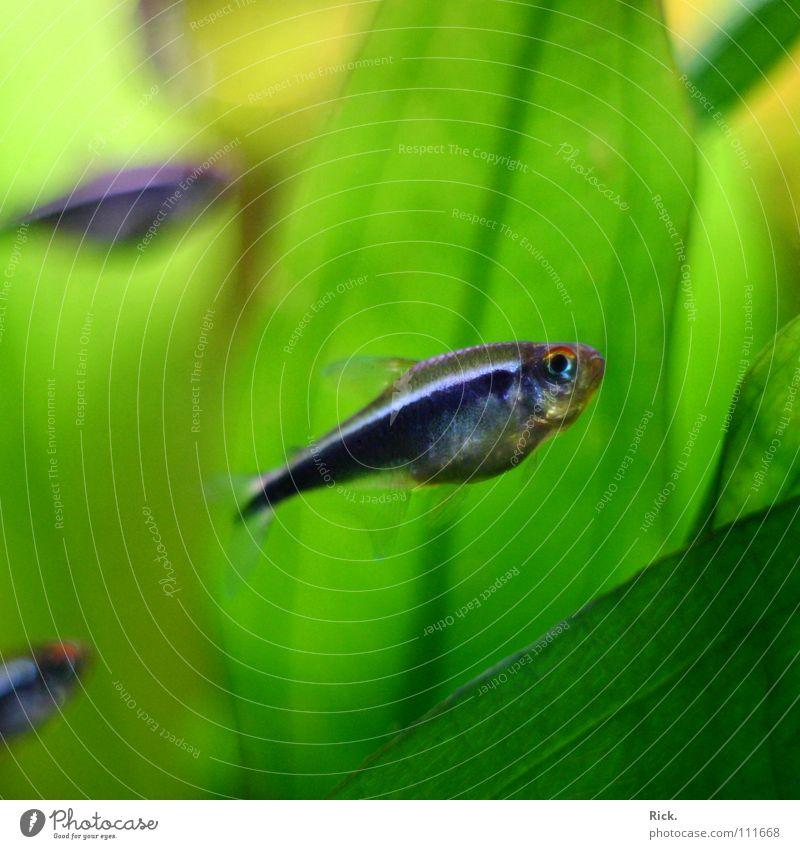 .Waldbewohner blau Wasser grün Pflanze Einsamkeit schwarz dunkel Auge Gefühle hell Linie Zusammensein Mund mehrere Elektrizität Fisch