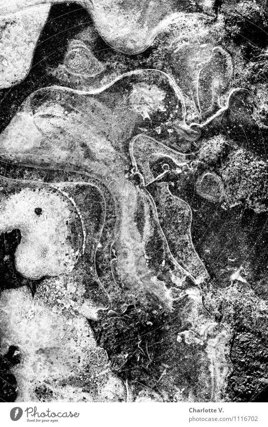 Amorphe Masse Umwelt Urelemente Wasser Winter Eis Frost Kristalle frieren fantastisch fest kalt grau schwarz weiß Eiskristall Blase amorph geschwungen gefroren