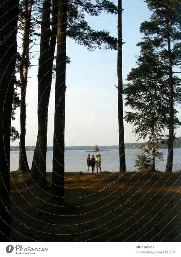 Pension Seeblick Himmel Baum Sommer Wald Freiheit See Landschaft Küste Insel Freizeit & Hobby Waldlichtung Hochformat