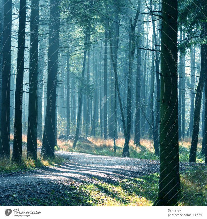 Morgenstimmung Wald Nadelwald Guten Morgen Sonne Frieden Luft atmen Atem Waldboden Blatt Baum Fichte Wald-Kiefer Eiche Erlen Tanne Joggen Sonnenaufgang Nebel