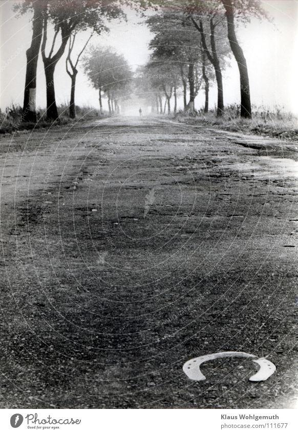 Aufbruch wandern Horizont Nebel Baum Salow Verkehrswege Straße Pferd Traurigkeit Fernweh Nostalgie Allee Asphalt Hufeisen dramatisch Landstraße Abschied Körnung