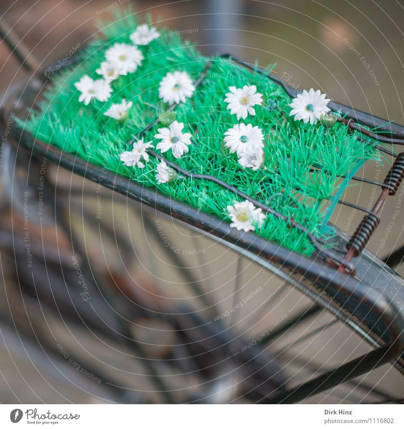 Mobiler Frühling Pflanze grün Sommer weiß Freude Blüte lustig außergewöhnlich braun Fahrrad verrückt Kreativität Lebensfreude Idee retro