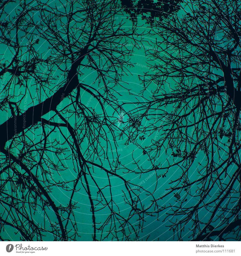 Märchenwald Himmel blau grün Baum Wolken dunkel Herbst Beleuchtung Tod Stimmung Regen Nebel Angst verrückt gefährlich fantastisch