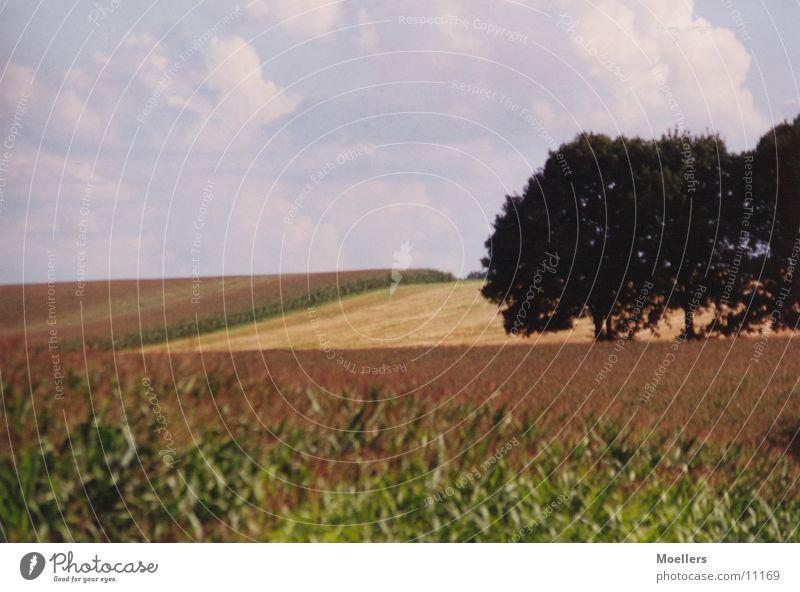 Stille Baum ruhig Landschaft Feld