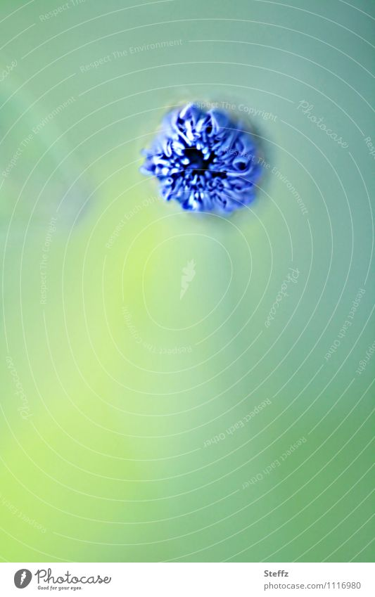 Frühlings-Sensor Natur blau Pflanze grün Blume Blüte warten Beginn Blühend neu Blütenknospen Vorfreude Erwartung Frühlingsgefühle Entwicklung
