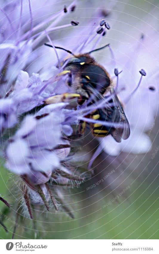eine Wespe eingehüllt im Duft fressende Wespe versteckt versteckend Nahrungssuche Versteck voll dabei festhalten mittendrin Sicherheit sommerliche Impression
