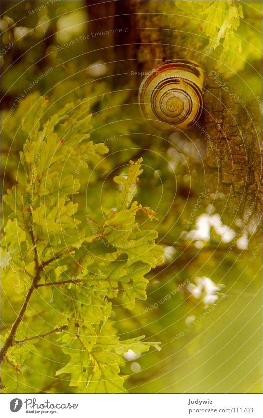 **Glück** grün Sommer Freude Farbe Leben Herbst Glück Zufriedenheit harmonisch Schnecke Eiche