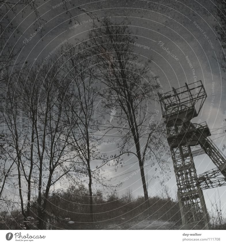 Ruhrpott Reflexion & Spiegelung dunkel Zeche Ruhrgebiet Pfütze Baum Wasser