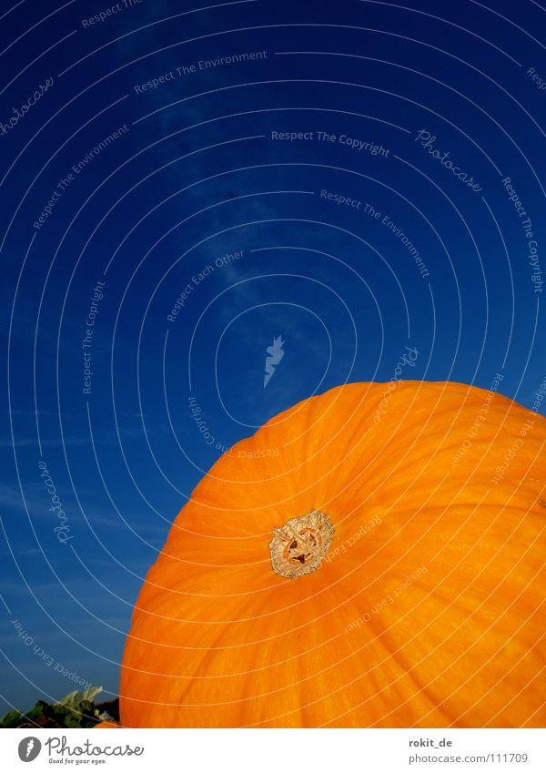 Kürbis blau Freude orange Feld rund Furche Halloween Gemüse schnitzen Kürbissuppe