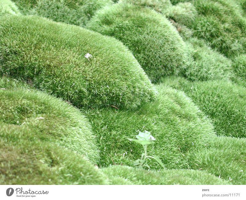 wiese Natur grün Wiese Rasen