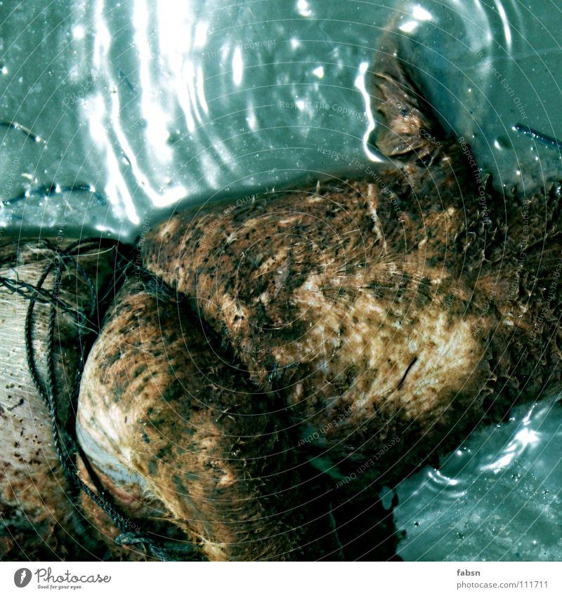 WASSERSCHWEIN Wasser Tier Erholung Tod Schnur Fluss Asien Im Wasser treiben Ekel Leiche Schwein befestigen ertrinken Wasserleiche