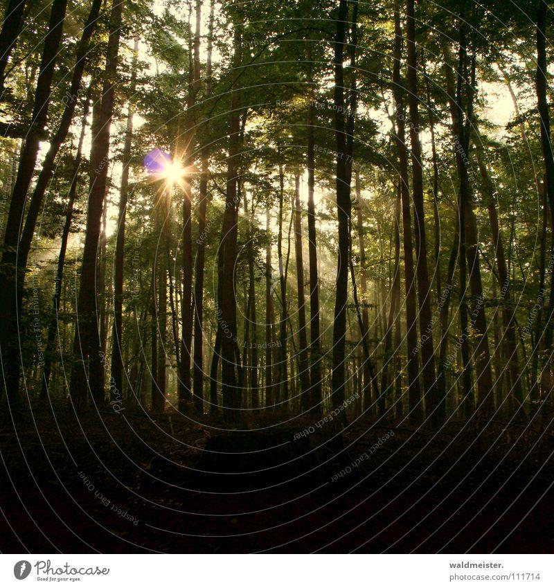 Damals im Wald Baum Sonne grün Herbst Nebel Romantik Urwald Strahlung feucht mystisch Märchen Zauberei u. Magie Lichtstrahl Märchenwald Zauberwald
