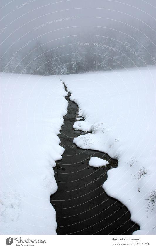 ein Riss geht durch den Schwarzwald !!! Himmel Natur Wasser weiß Baum Ferien & Urlaub & Reisen Winter Einsamkeit kalt Schnee Horizont Deutschland