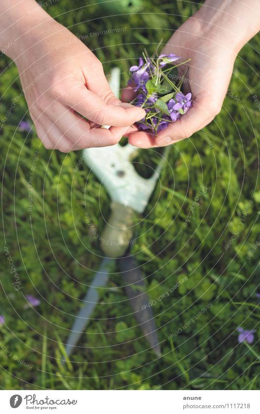 schnippschnapp Gartenarbeit Botaniker Floristik Werkzeug Schere Hand Finger Umwelt Natur Pflanze Frühling Sommer Schönes Wetter Blume Gras Blüte Grünpflanze