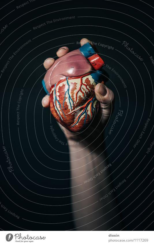 Herz Für Die Sache Hand Arme festhalten Medikament Muskulatur Anatomie Entschlossenheit Nachbildung Herz-/Kreislauf-System Pumpe Venen Arterien Herzinfarkt