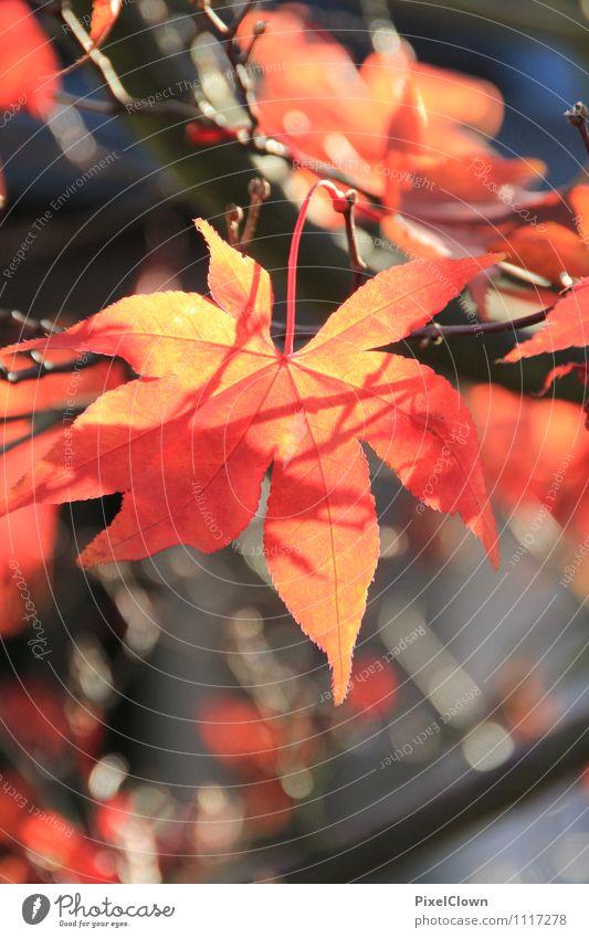 feurig Natur Ferien & Urlaub & Reisen Pflanze schön Baum Blatt ruhig Tier Wald gelb Herbst Stil Garten Lifestyle braun Stimmung