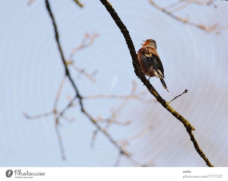wo bleibst du Tier Freiheit Vogel Wildtier Flügel Frühlingsgefühle