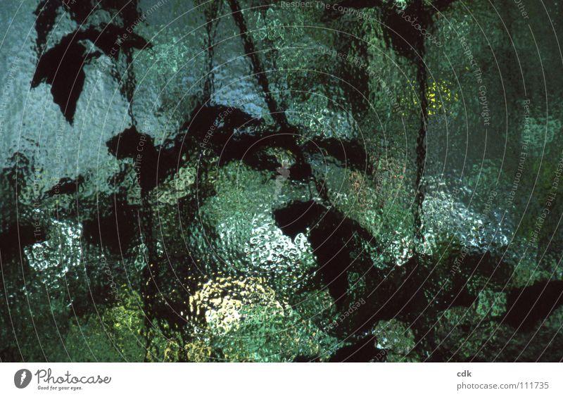 Erinnerung an den Sommer Wasser grün blau Pflanze Blatt Farbe Leben dunkel Fenster Herbst Garten Stil Wärme Luft hell