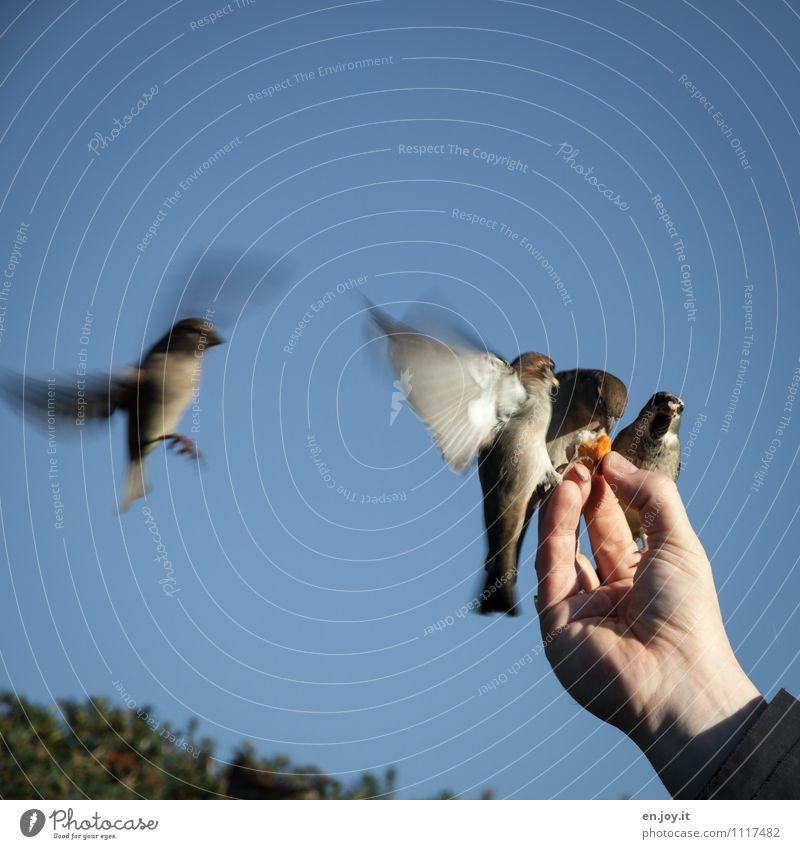 meins, meins, meins Natur Hand Tier Leben Glück außergewöhnlich fliegen Vogel Idylle Wildtier Fröhlichkeit Lebensfreude Schönes Wetter Hoffnung Glaube Vertrauen