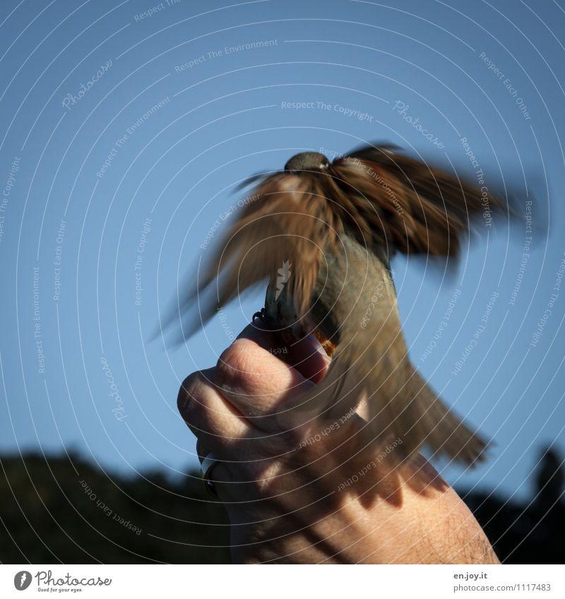 Fastfood Hand Wolkenloser Himmel Schönes Wetter Tier Wildtier Vogel Spatz Sperlingsvögel 1 fliegen Fressen füttern außergewöhnlich Vertrauen Tierliebe gefräßig