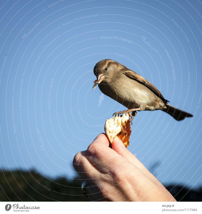 Fingerfood Natur Hand Tier Glück außergewöhnlich Vogel Idylle Wildtier Lebensfreude Schönes Wetter Freundlichkeit Hoffnung Glaube nah Vertrauen